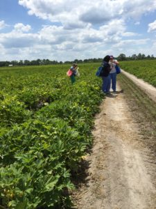 Students try their hand at picking vegetables during a farm tour